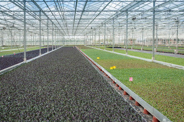 Different types of young cabbage plants in a modern greenhouse c
