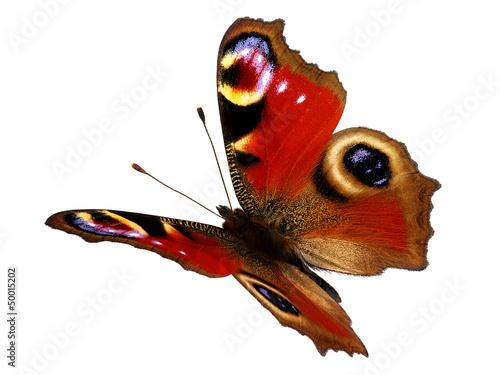 Fotobehang Vlinder European Peacock butterfly (Inachis io) in flight