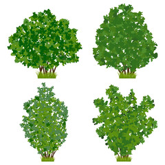 Summer bush vector set