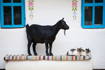 Goat and cats near chalet