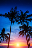 palm trees, sunset and the starry sky