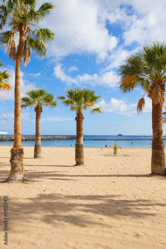 palms of  las Teresitas beach, Tenerife, Spain