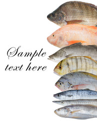 Fish background on white