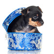 little black puppy in a blue box