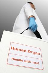 Arzt mit Box fuer Transplantationsorgan