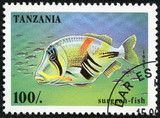stamp printed in Tanzania showing Surgeon-fish