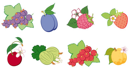 set of bright fruit, abstract