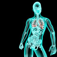 Radiografia cuerpo humano