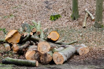 Waldarbeiten, gefällte Bäume am Wegrand