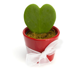 Cactus heart in a red pot