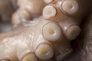 oktopus,krake,tintenfisch, fangarme