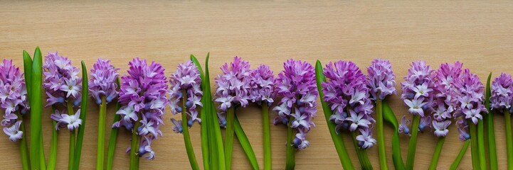Purple Hyacinth panorama