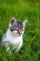 Kitten - Katze im Gras