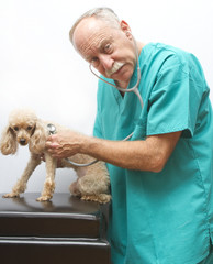 Veterinarian Doing Emergency Checkup