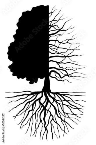 Tree concept - 50046247