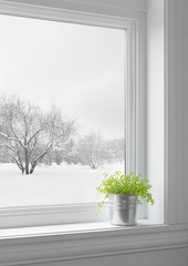 Green plant and winter landscape seen through the window