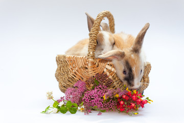 sweet little rabbits