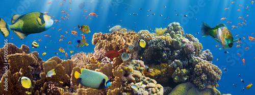 Papiers peints Recifs coralliens Coral and fish