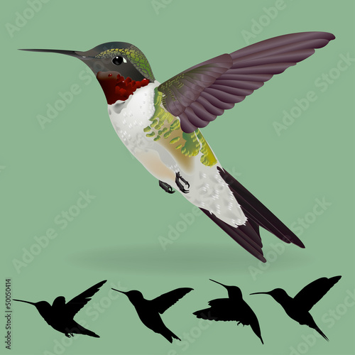 humming bird vector