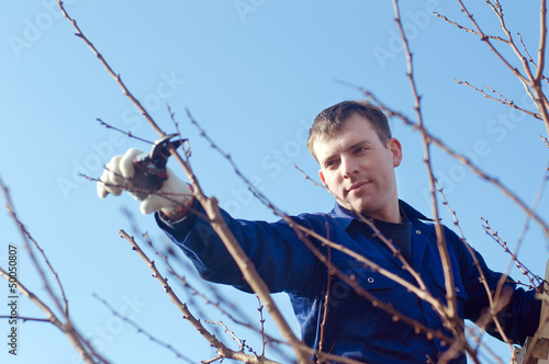 Portrait of young man pruning brunches