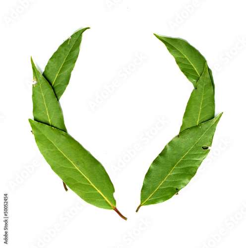 green leaves of a tree on a white background