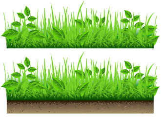 Grass Border Isolated On White Background