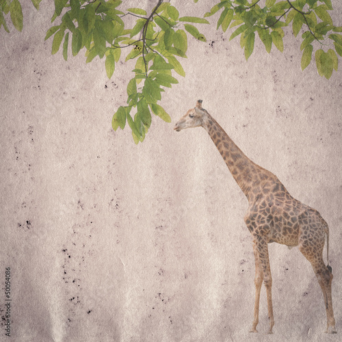 giraffe and leaf old grunge paper texture