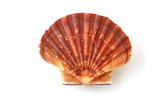 king scallop, saint jacques, on white background