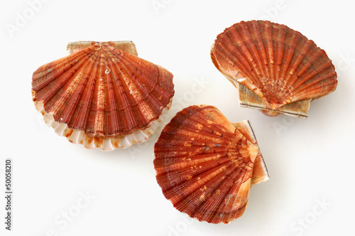 three scallops, saint jacques, on white background