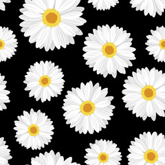 Seamless background with daisy flowers on black. Vector.