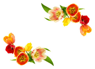 Rahmen oder Verzierung aus Tulpen