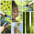 Collage Bouddha vert
