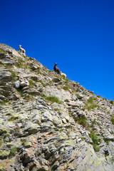 Pascolo - Valle Stura - Alpi Marittime