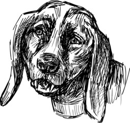 muzzle of a dog