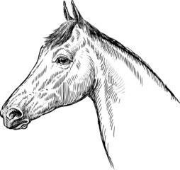 profile of horse