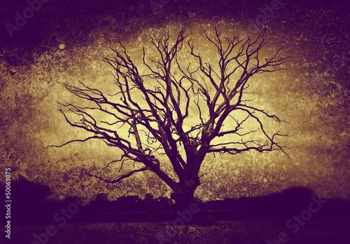 dark bare tree