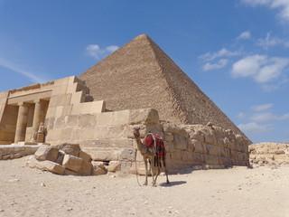 Camel at the pyramides 2