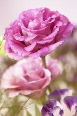 Flowers art closeup. Floral background