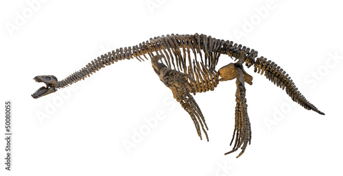 Plesiosaurus skeleton isolated Poster