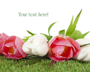 Bouquet of spring tulips on a green artificial grass.