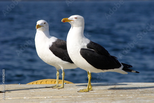 Para Seagull