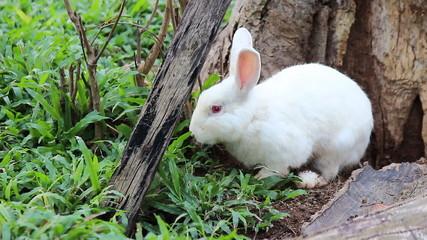 Rabbit in the farm - Wonder farm , Pattaya , Thailand