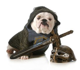 dog dressed as knight