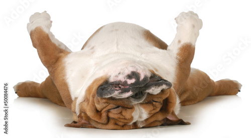 Foto Spatwand Hond dog sleeping