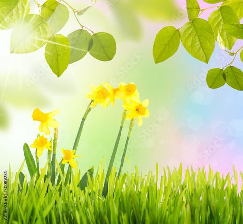 Fototapeten,sunlight,wiese,osterglocken,daffodil