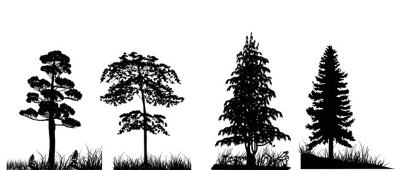 trees in grass set isolated on white