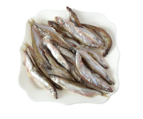 Fresh fish on plate on white background