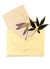 old envelope and the dried-up flower on paper isolated on a whit