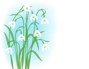 Snowdrops. Greeting card with first spring flowers.