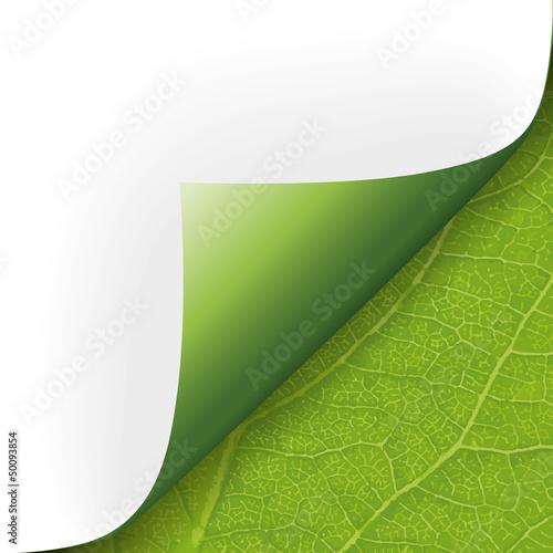 Ecke Papier mit Pflanzenstruktur
